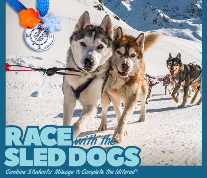sled dogs running the iditarod;